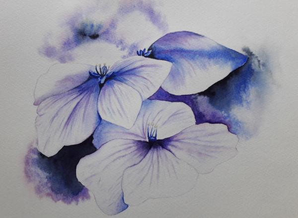 Watercolour Hydrangea